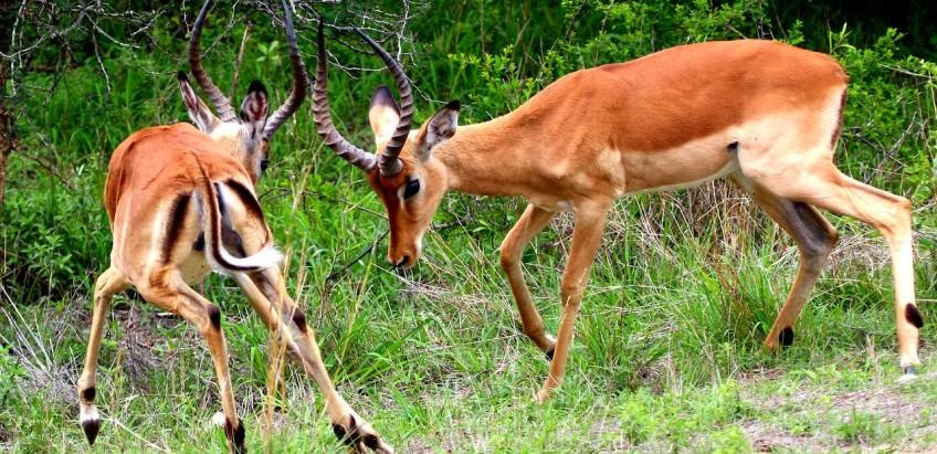 Boj v přírodě